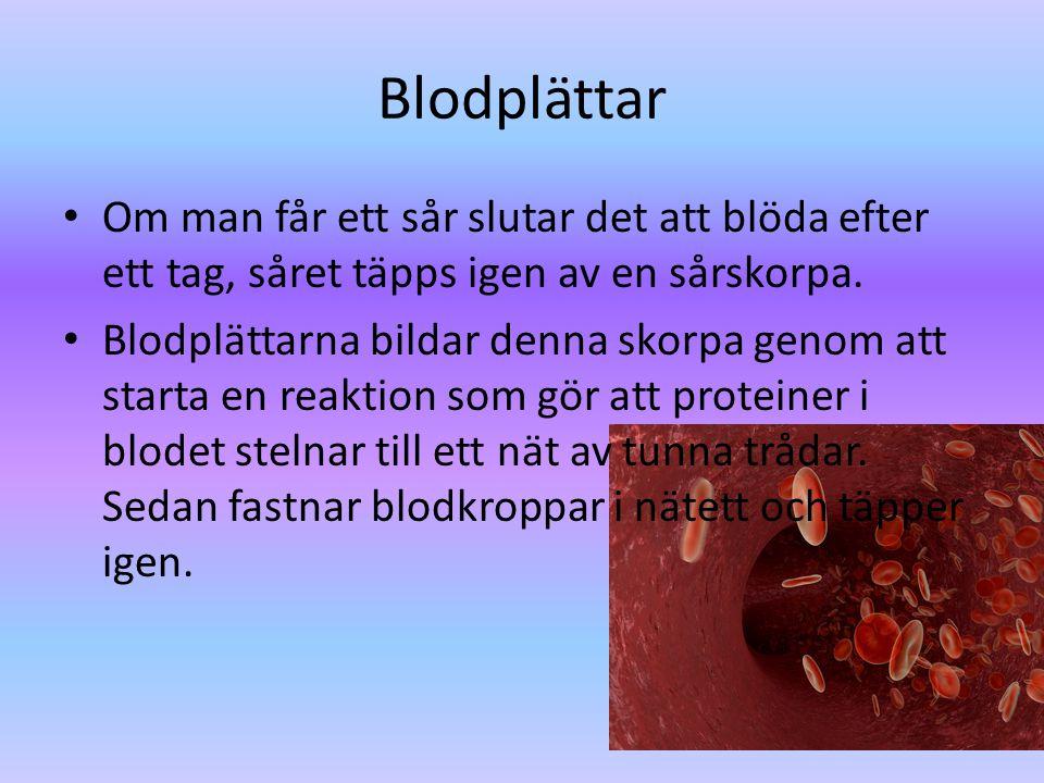 Blodplättar Om man får ett sår slutar det att blöda efter ett tag, såret täpps igen av en sårskorpa.