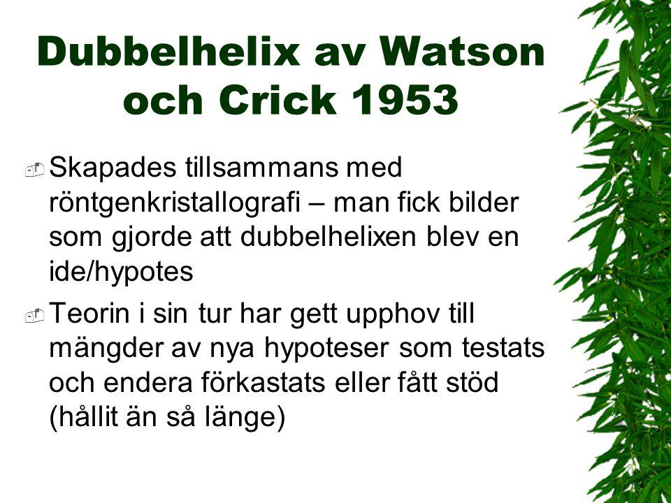 Dubbelhelix av Watson och Crick 1953