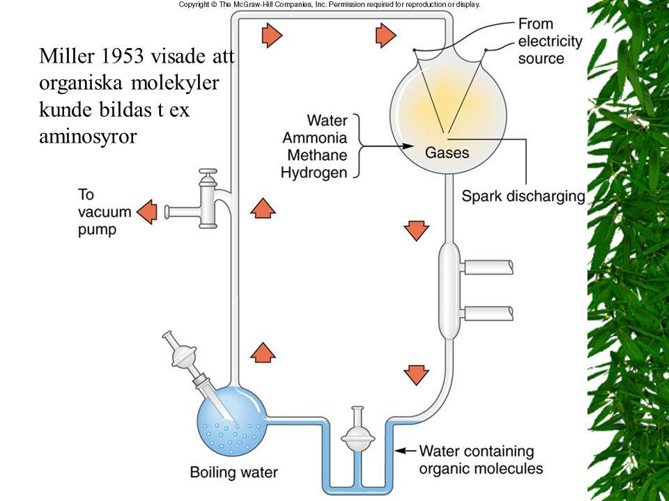 Miller 1953 visade att organiska molekyler kunde bildas t ex aminosyror