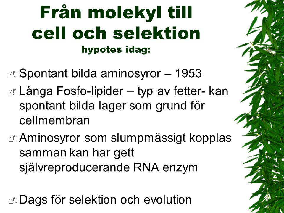 Från molekyl till cell och selektion hypotes idag: