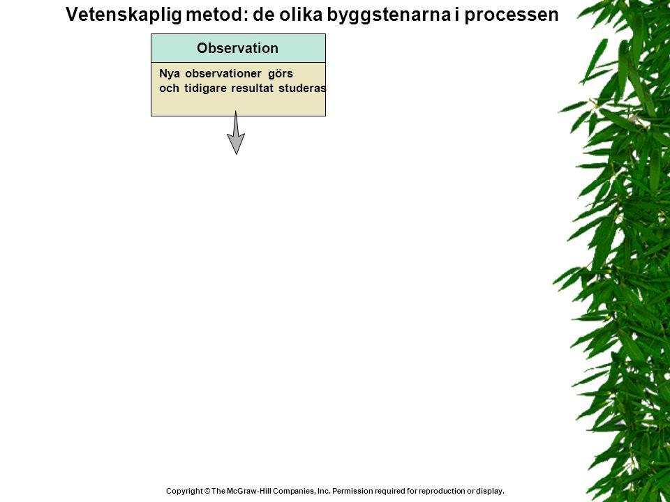 Vetenskaplig metod: de olika byggstenarna i processen