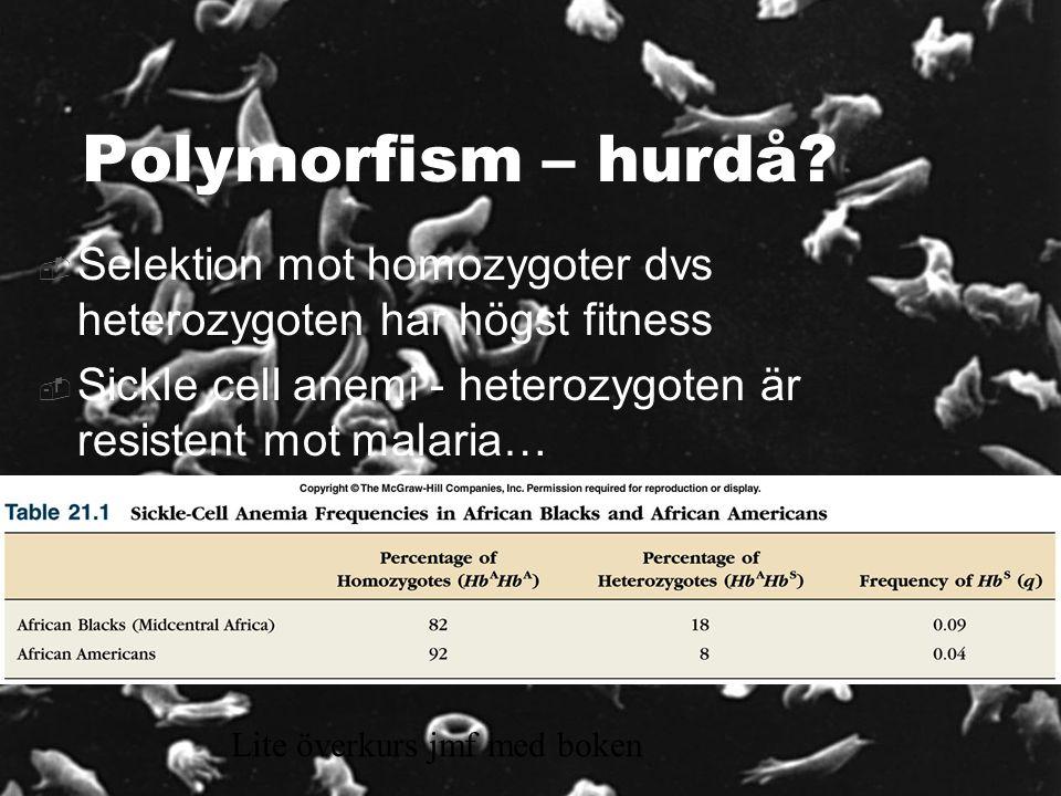 Polymorfism – hurdå Selektion mot homozygoter dvs heterozygoten har högst fitness. Sickle cell anemi - heterozygoten är resistent mot malaria…