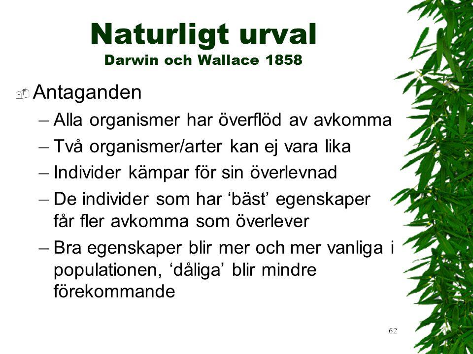 Naturligt urval Darwin och Wallace 1858