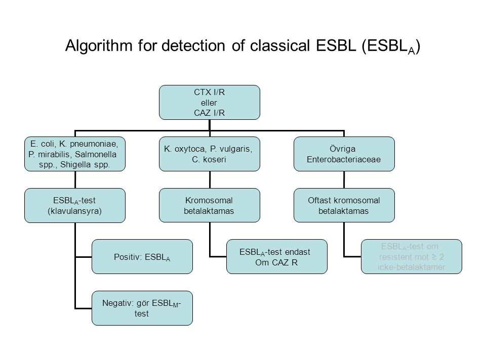 Algorithm for detection of classical ESBL (ESBLA)