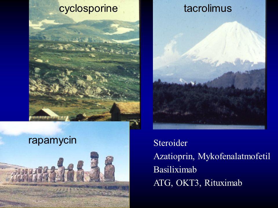 cyclosporine tacrolimus rapamycin Steroider