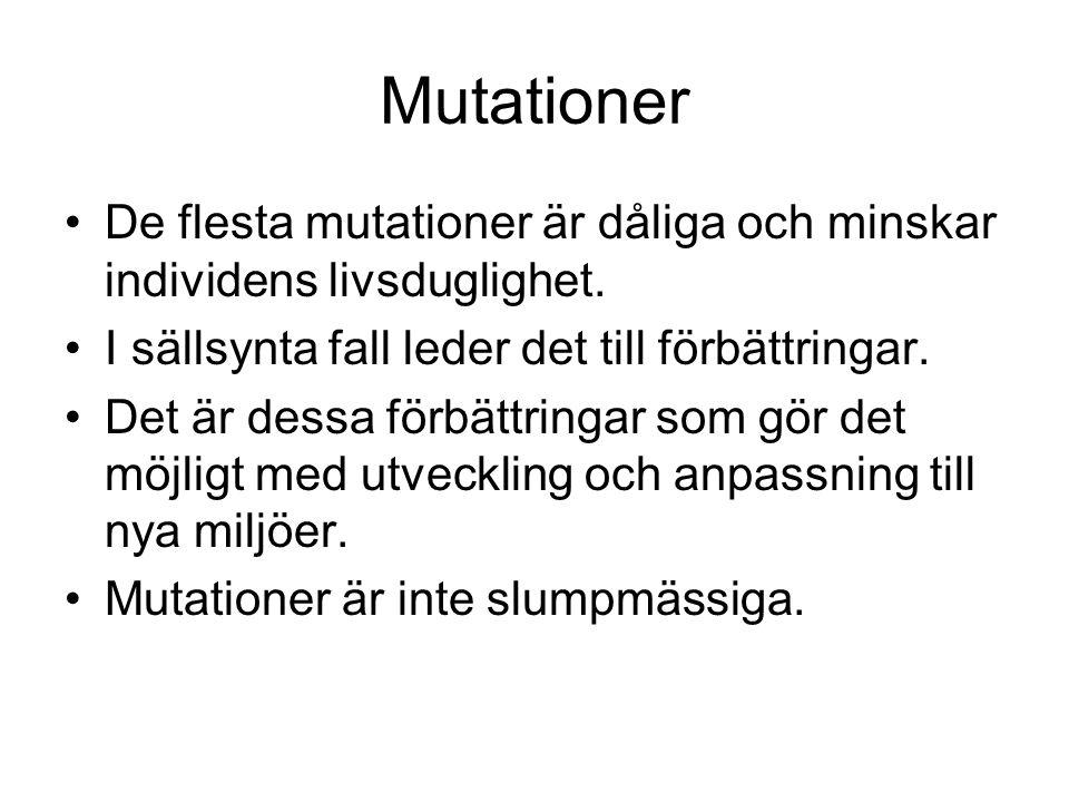 Mutationer De flesta mutationer är dåliga och minskar individens livsduglighet. I sällsynta fall leder det till förbättringar.