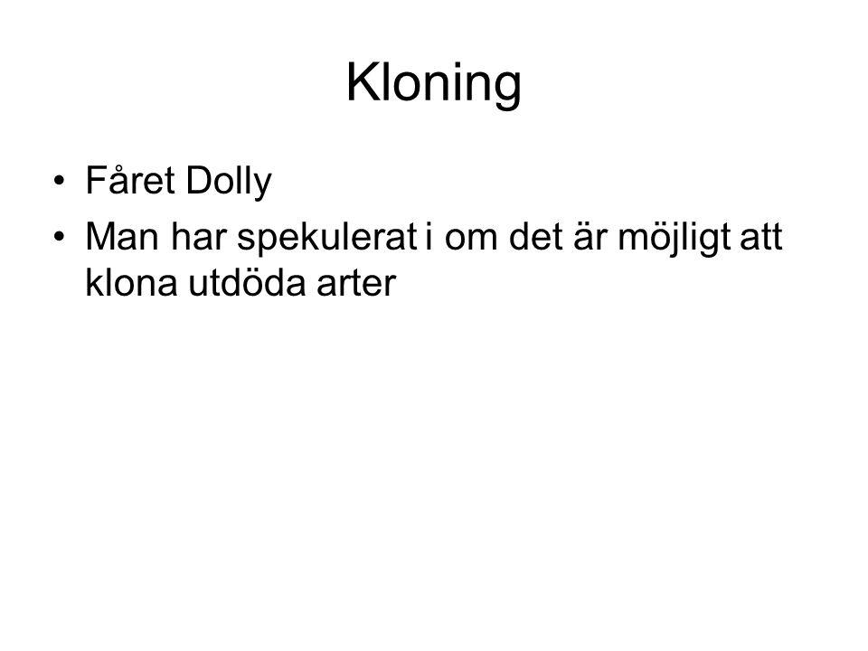 Kloning Fåret Dolly Man har spekulerat i om det är möjligt att klona utdöda arter