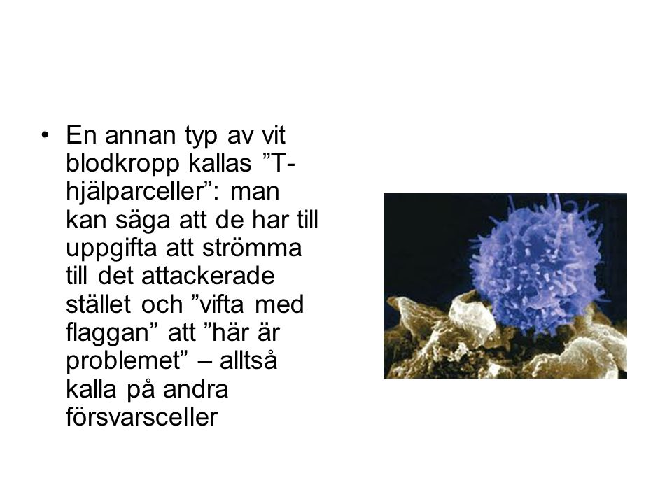 En annan typ av vit blodkropp kallas T-hjälparceller : man kan säga att de har till uppgifta att strömma till det attackerade stället och vifta med flaggan att här är problemet – alltså kalla på andra försvarsceller