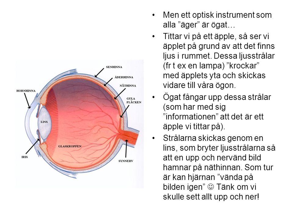 Men ett optisk instrument som alla äger är ögat…