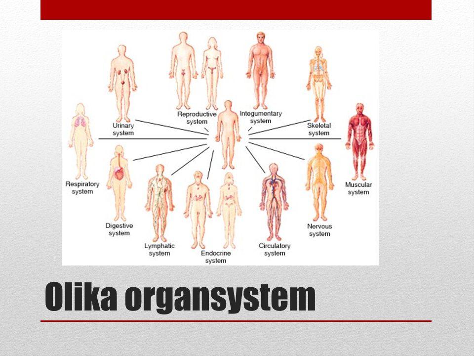 Olika organsystem