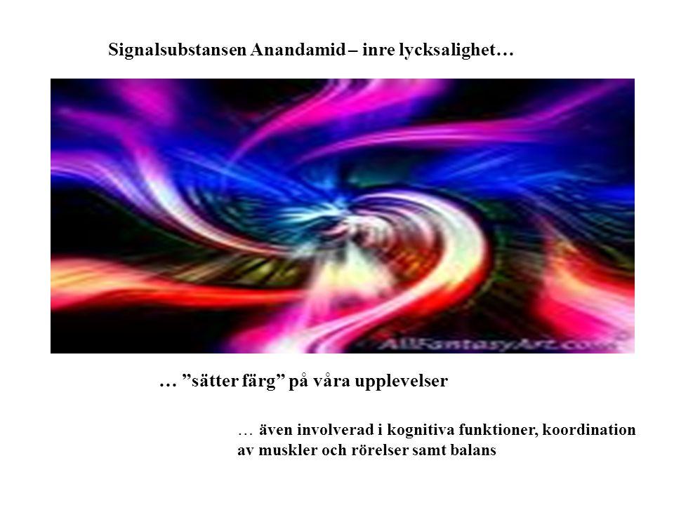 Signalsubstansen Anandamid – inre lycksalighet…