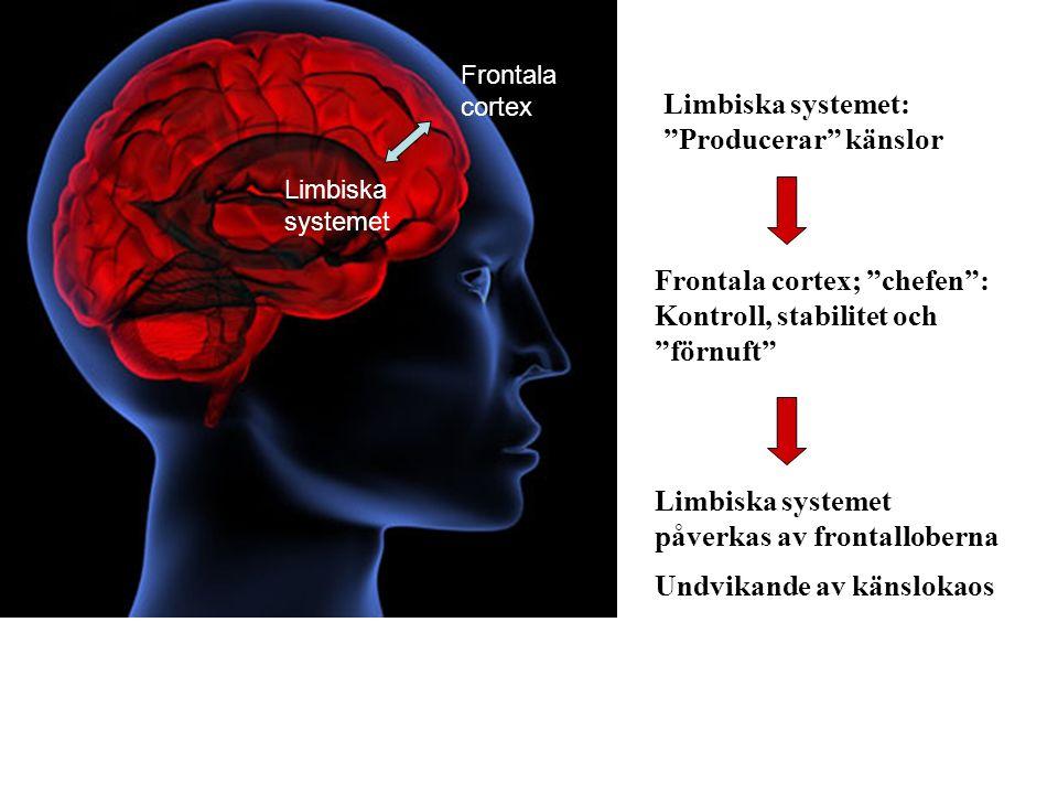 Frontala cortex; chefen : Kontroll, stabilitet och förnuft