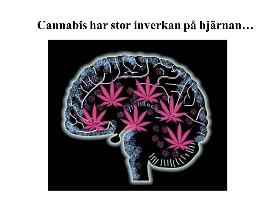 Cannabis har stor inverkan på hjärnan…