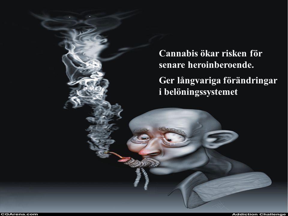 Cannabis ökar risken för
