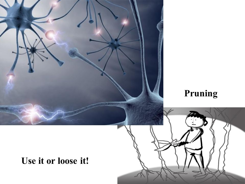 Pruning Use it or loose it!