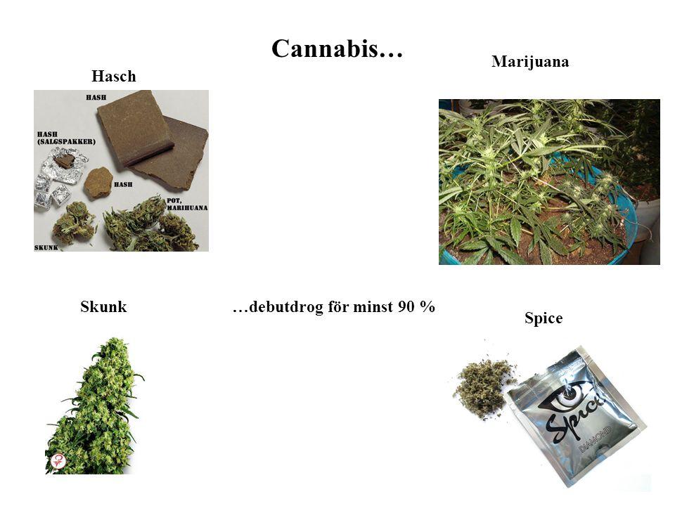 Cannabis… Marijuana Hasch Skunk …debutdrog för minst 90 % Spice