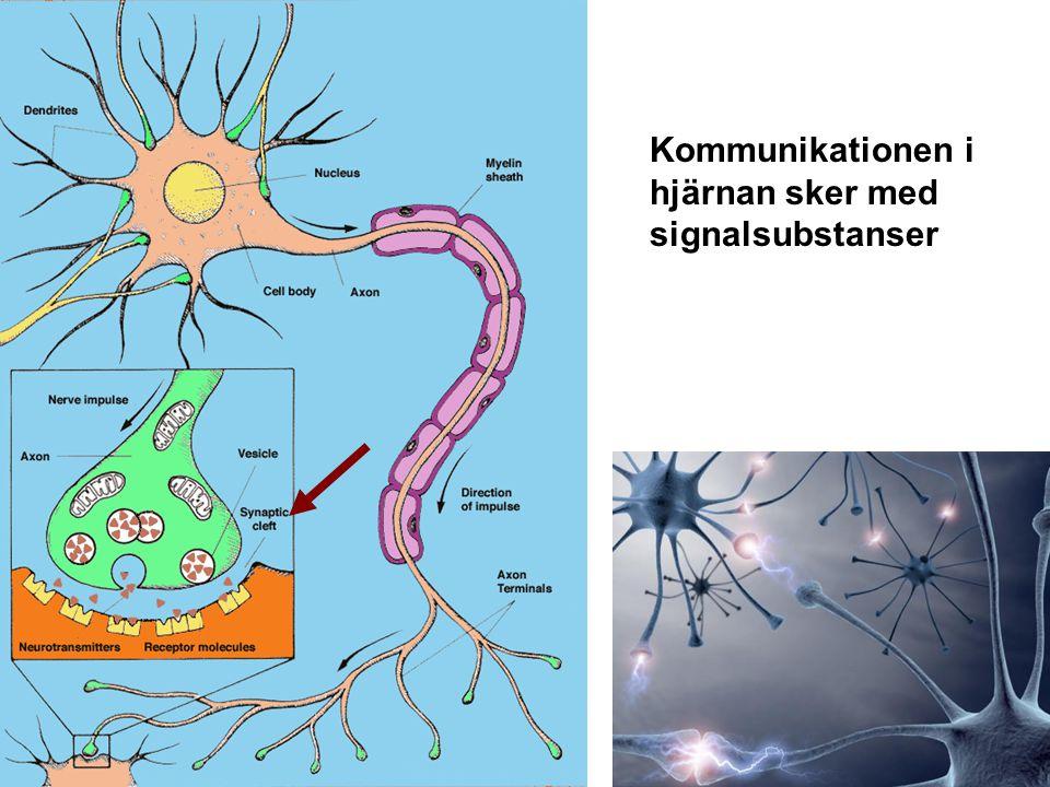 Kommunikationen i hjärnan sker med signalsubstanser