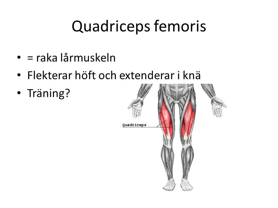 Quadriceps femoris = raka lårmuskeln