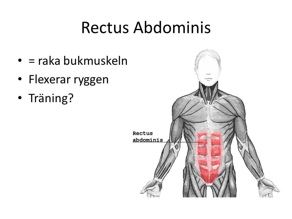 Rectus Abdominis = raka bukmuskeln Flexerar ryggen Träning