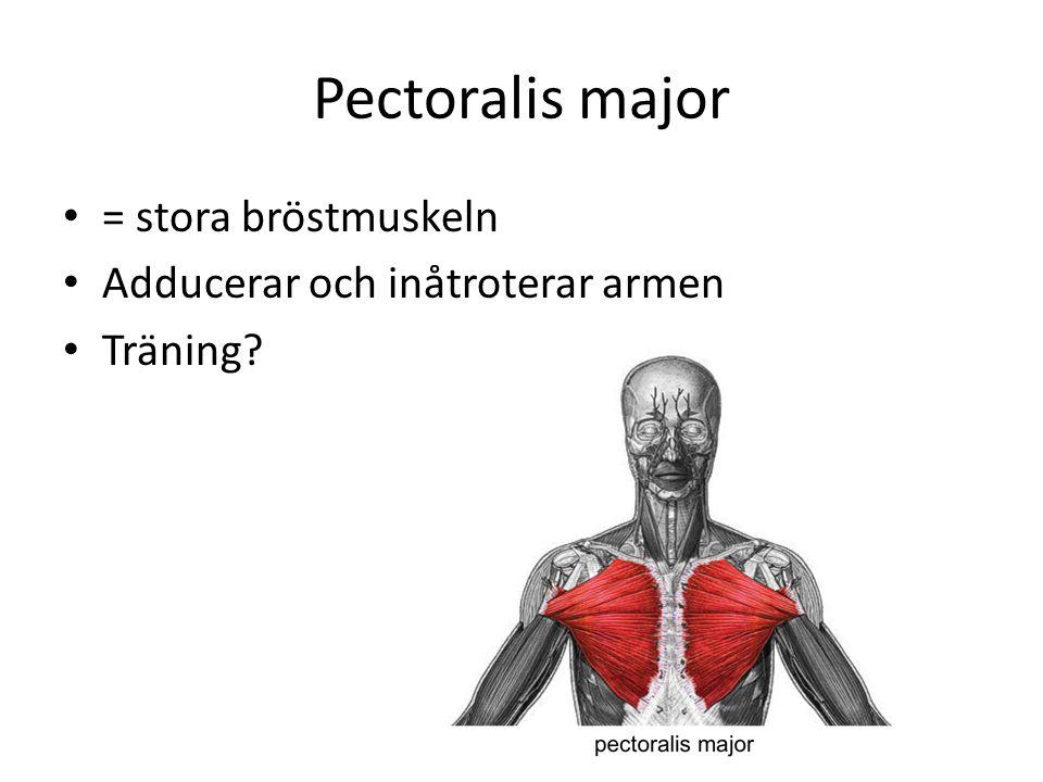 Pectoralis major = stora bröstmuskeln Adducerar och inåtroterar armen