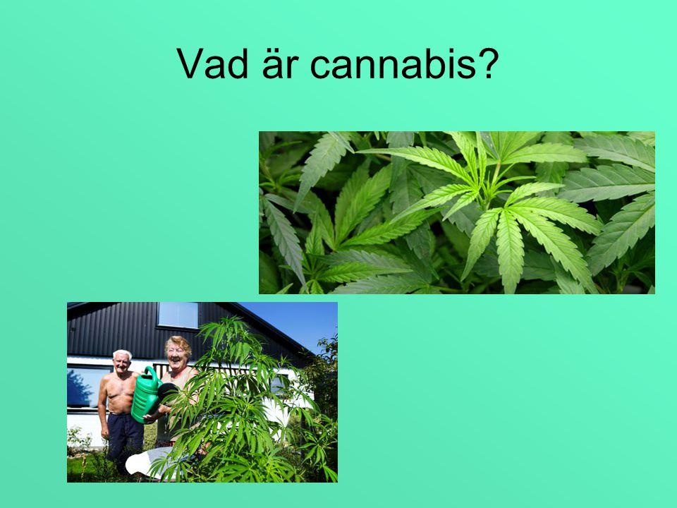 Vad är cannabis