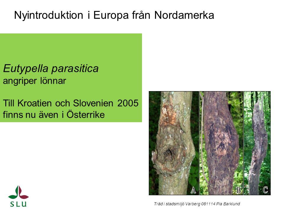 Nyintroduktion i Europa från Nordamerka