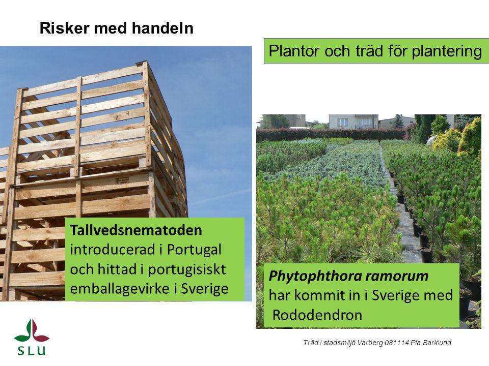 Plantor och träd för plantering