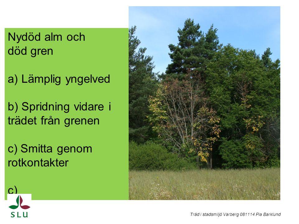 b) Spridning vidare i trädet från grenen