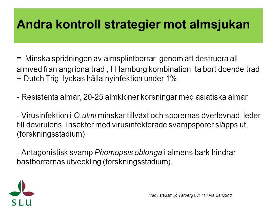 Andra kontroll strategier mot almsjukan - Minska spridningen av almsplintborrar, genom att destruera all almved från angripna träd , I Hamburg kombination ta bort döende träd + Dutch Trig, lyckas hålla nyinfektion under 1%. - Resistenta almar, 20-25 almkloner korsningar med asiatiska almar - Virusinfektion i O.ulmi minskar tillväxt och sporernas överlevnad, leder till devirulens. Insekter med virusinfekterade svampsporer släpps ut. (forskningsstadium) - Antagonistisk svamp Phomopsis oblonga i almens bark hindrar bastborrarnas utveckling (forskningsstadium).