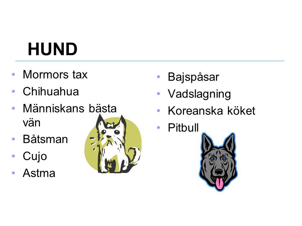 HUND Mormors tax Bajspåsar Chihuahua Vadslagning Människans bästa vän