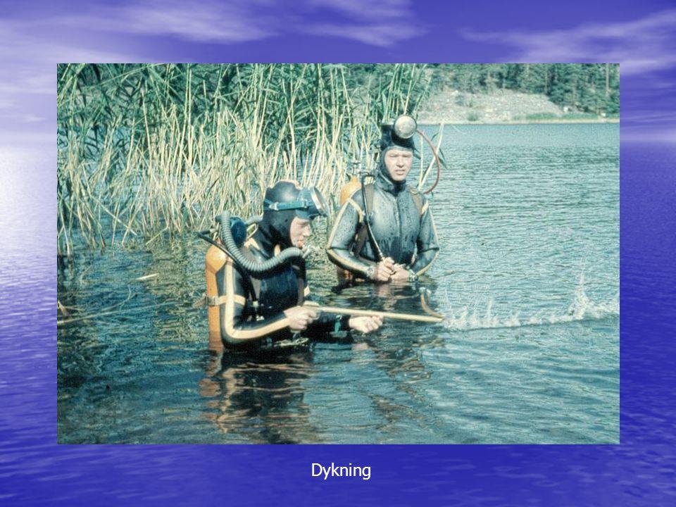 Dykning Dykning