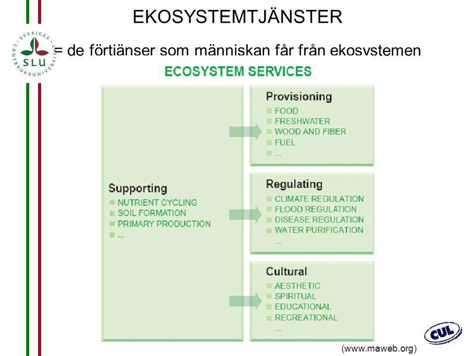 EKOSYSTEMTJÄNSTER = de förtjänser som människan får från ekosystemen