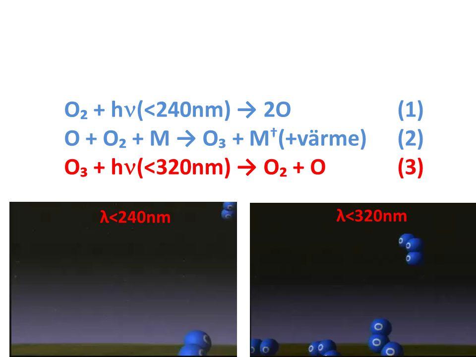 O + O₂ + M → O₃ + M†(+värme) (2) O₃ + h(<320nm) → O₂ + O (3)