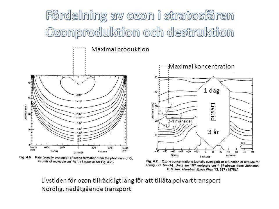 Fördelning av ozon i stratosfären Ozonproduktion och destruktion