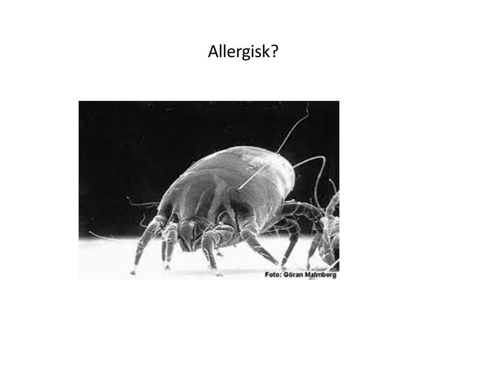 Allergisk