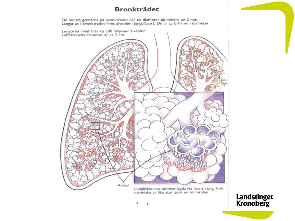 Lungornas uppgift är att syresätta blodet och vädra ut den koldioxid som bildas vid vår ämnesomsättning.