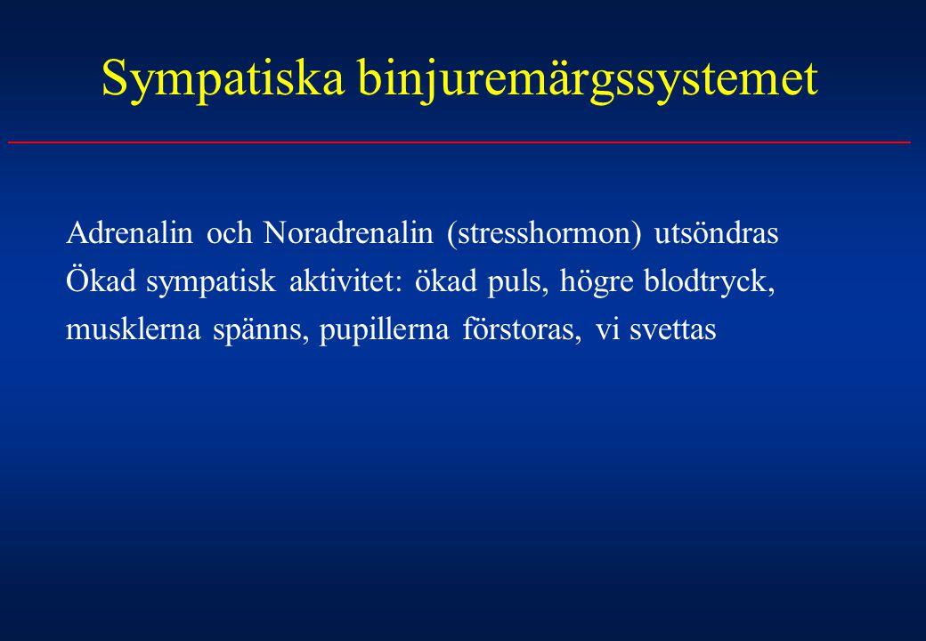 Sympatiska binjuremärgssystemet
