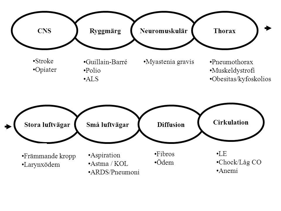 CNS Ryggmärg. Neuromuskulär. Thorax. Stroke. Opiater. Guillain-Barré. Polio. ALS. Pneumothorax.