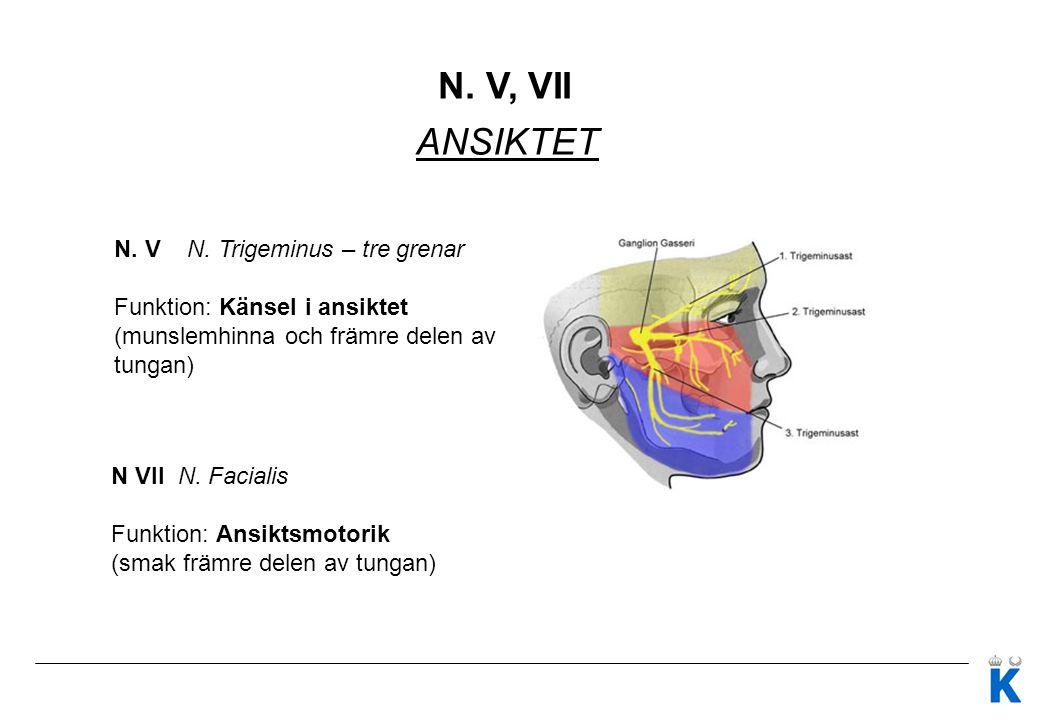 N. V, VII ANSIKTET N. V N. Trigeminus – tre grenar