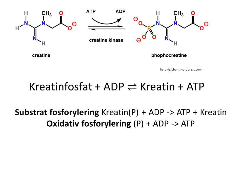 Kreatinfosfat + ADP ⇌ Kreatin + ATP