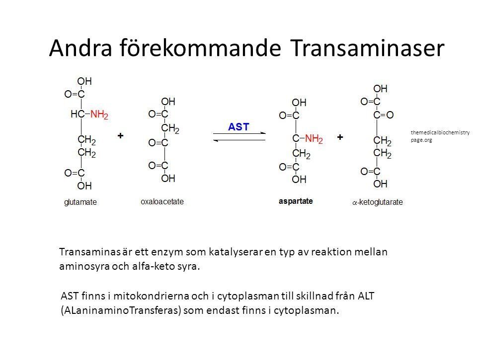 Andra förekommande Transaminaser