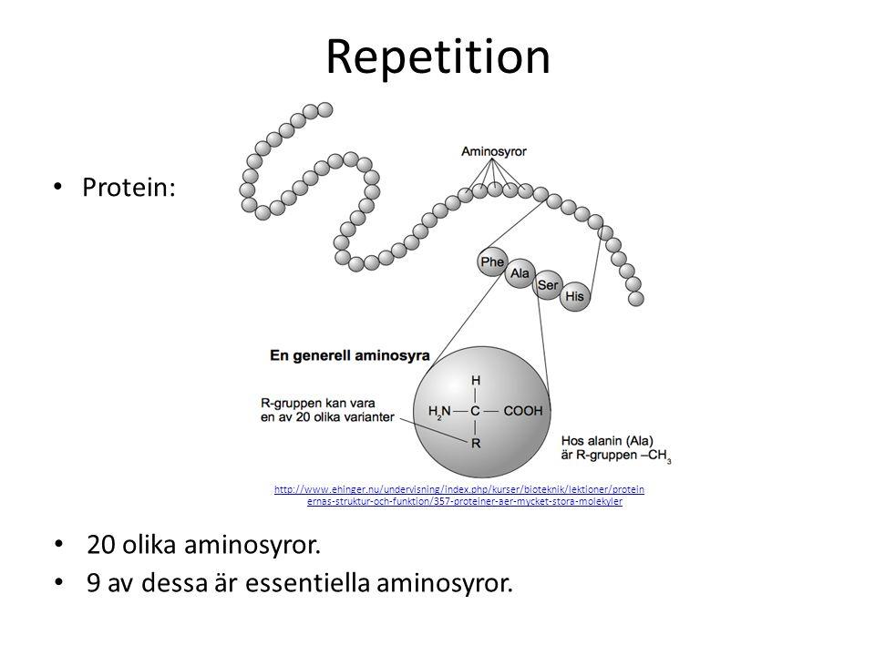 Repetition Protein: 20 olika aminosyror.
