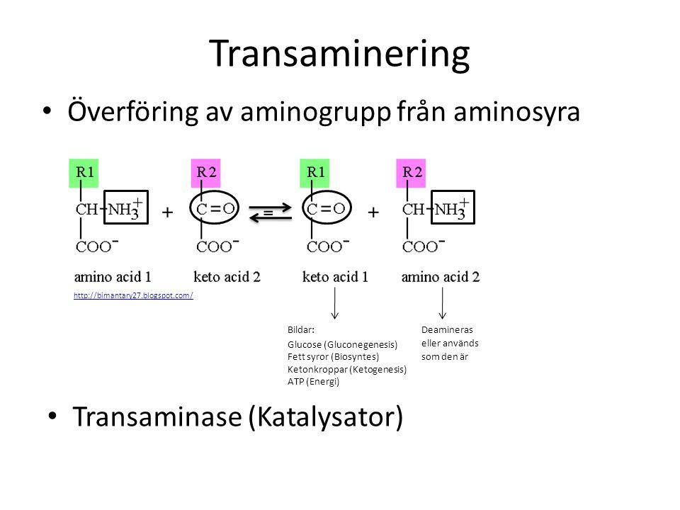 Transaminering Överföring av aminogrupp från aminosyra