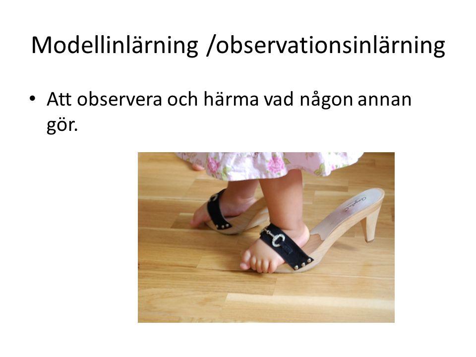 Modellinlärning /observationsinlärning