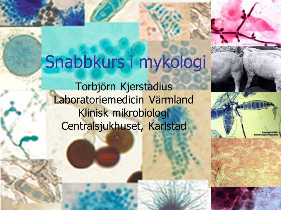 Snabbkurs i mykologi Torbjörn Kjerstadius Laboratoriemedicin Värmland