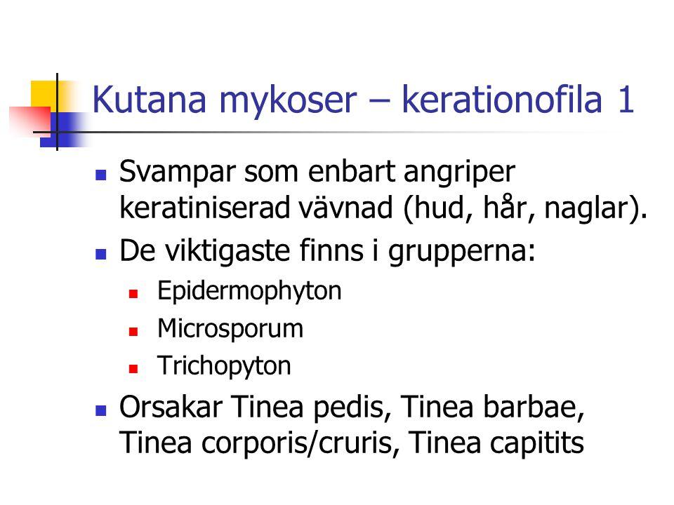 Kutana mykoser – kerationofila 1