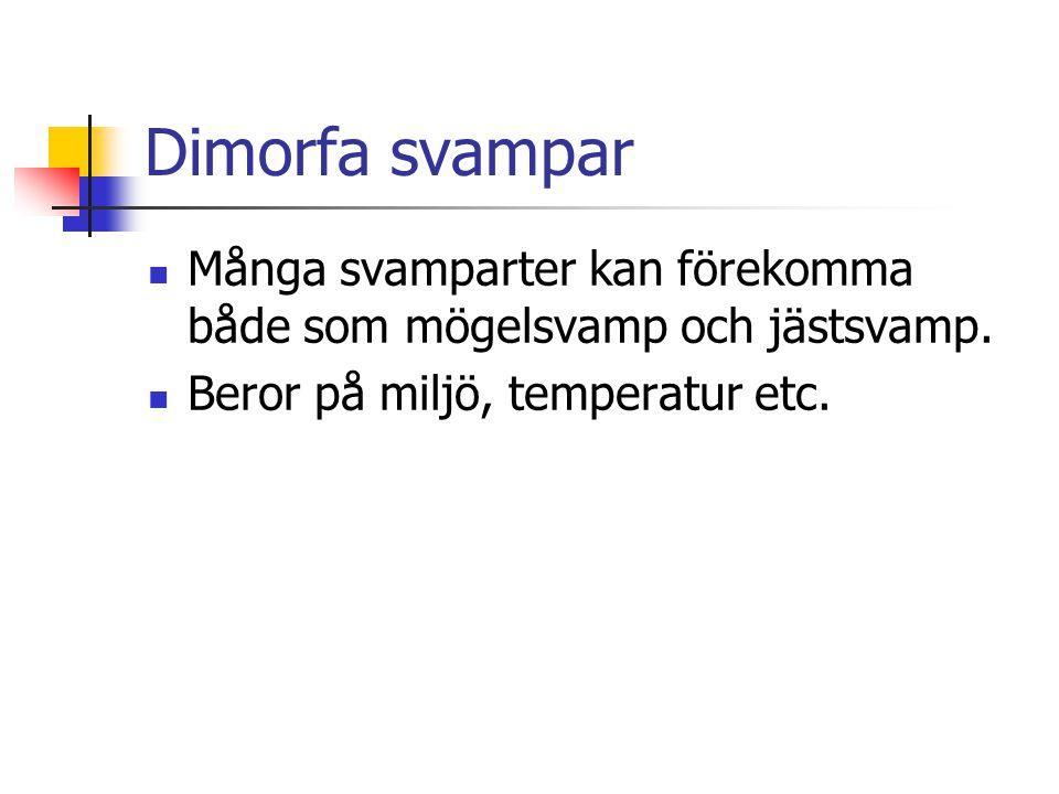 Dimorfa svampar Många svamparter kan förekomma både som mögelsvamp och jästsvamp.