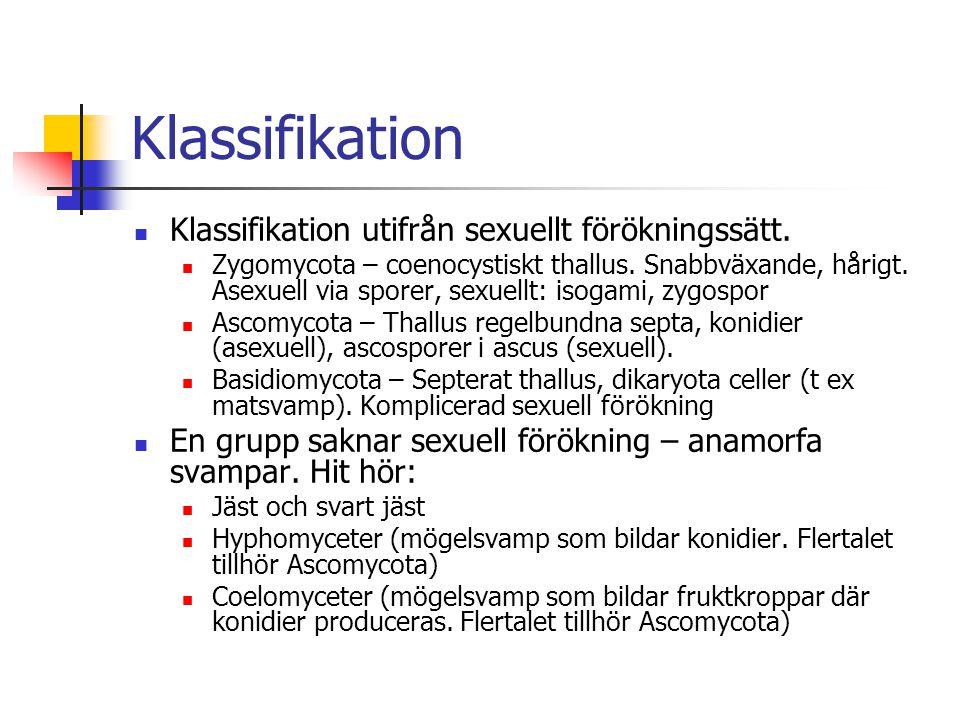 Klassifikation Klassifikation utifrån sexuellt förökningssätt.