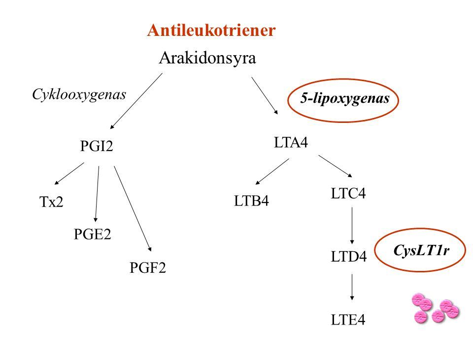 Antileukotriener Arakidonsyra Cyklooxygenas 5-lipoxygenas LTA4 PGI2