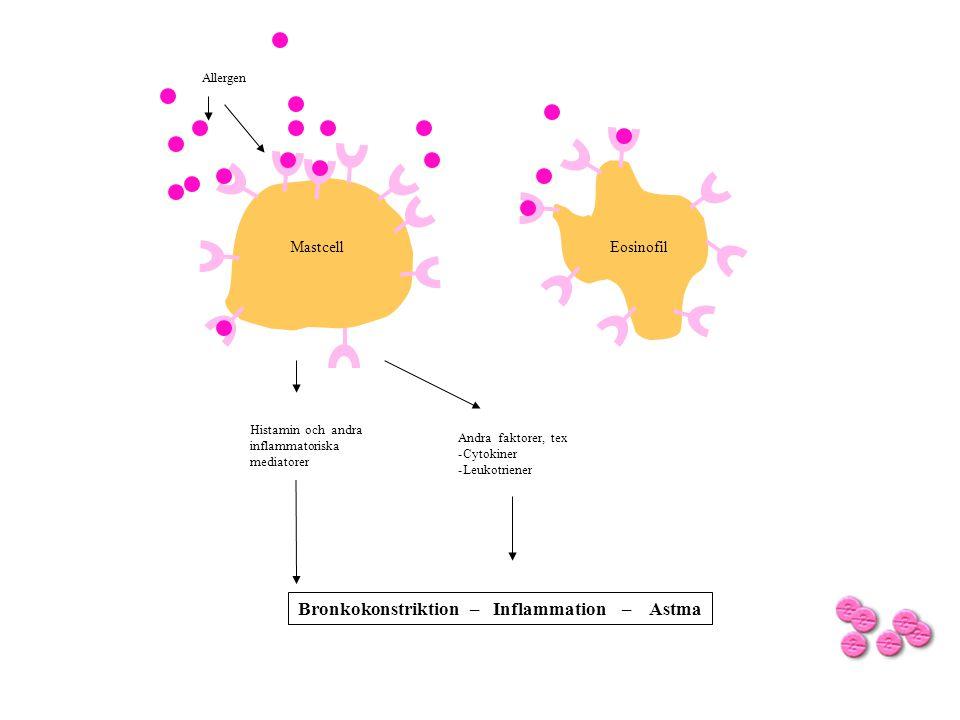 Bronkokonstriktion – Inflammation – Astma